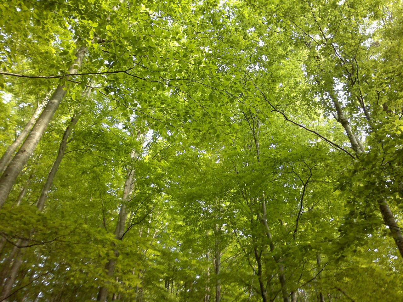 Il verde a Primavera